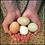 Thumbnail: Farm Fresh Eggs