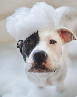 dog-bath-soap-TS-503698881_InBtwntheBlin