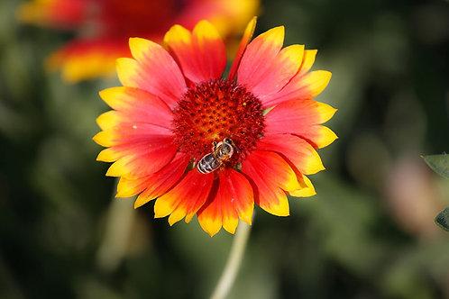 Цветы 32