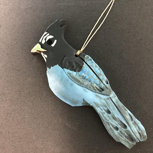 Bird: Stellar's Jay