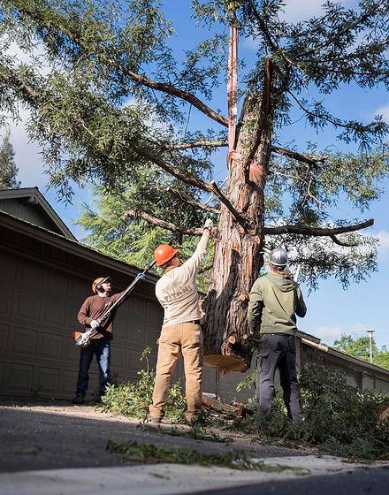general-tree-care.jpg