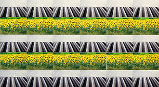 Archive (grey/ yellow/ floors/ flowers)