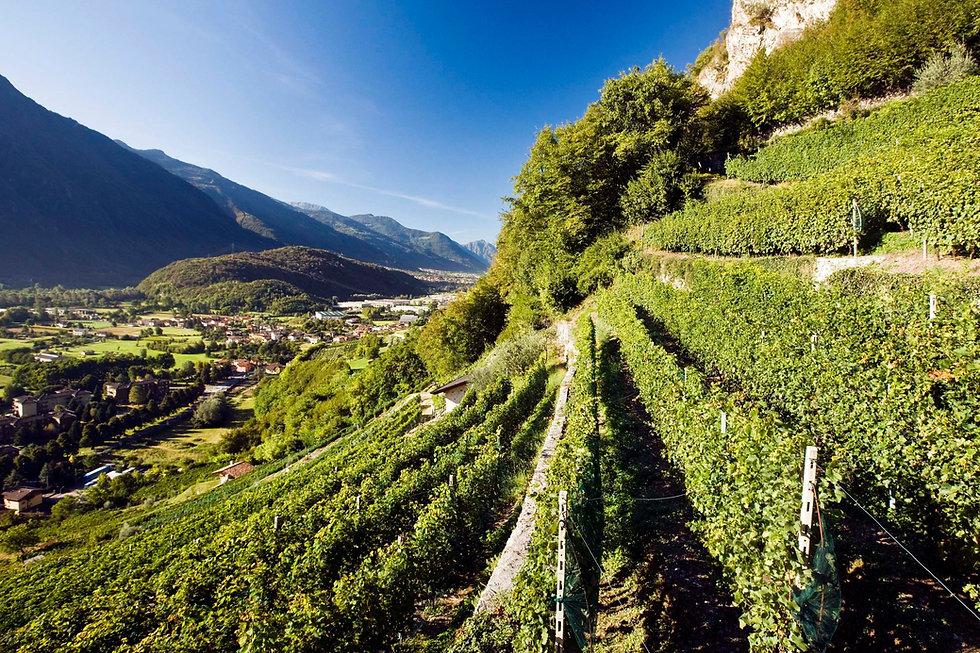 Terrazzamenti_di_Piancogno_-_Cultivar_Delle_Volte_-_Foto_Fenocolo.jpg