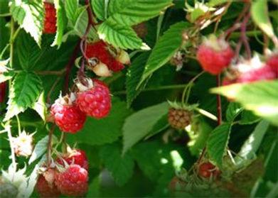 Percorso dei frutti di bosco