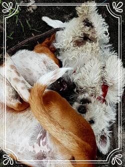 Pups: Munchkin and Savannah