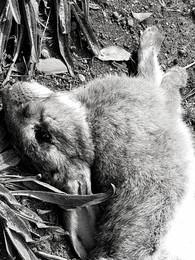 Rabbit, March 2020