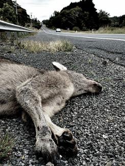 Kangaroo, April 2020