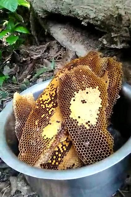 Forest Honey [500 g]
