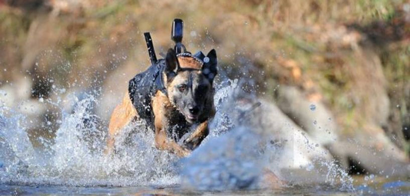 Navy-SEAL-mwd-sofrep_edited.jpg