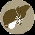 gallbladder2.png