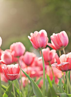 Choosing Thankfulness & Hope