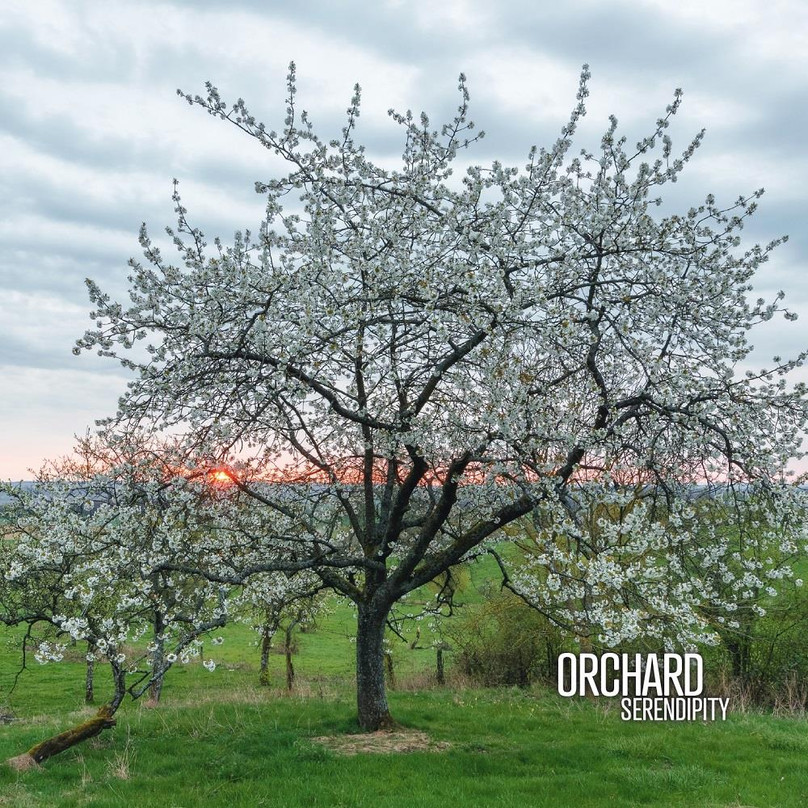 02 sept. ~Orchard ~