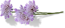 Flower-decoration_635.png