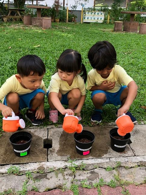 Nursery Violet Watering plants.jpg
