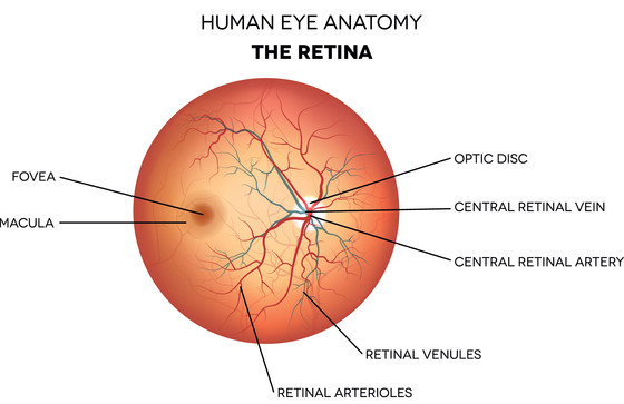 What is Retina in the Eye?