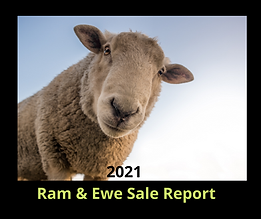 2021 Sale Report.png