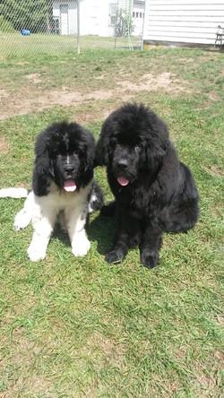 Buddy & Belle