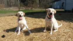 Moshie and Dakota