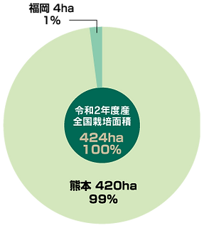 栽培面積_い草・畳表の生産状況