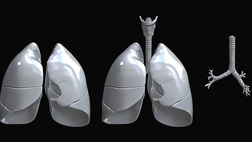 Human Lung Highly Detailed