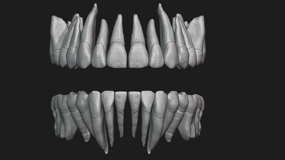 Human Teeth with Pulp Cavity
