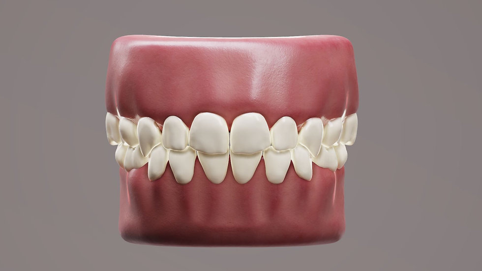Primary Human Teeth PBR 3d Model