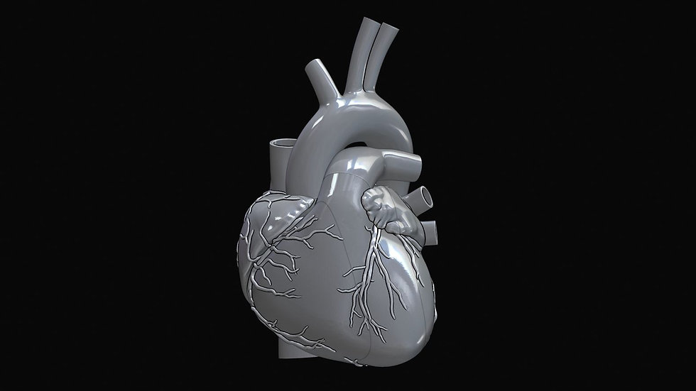 Human Heart Highly Detailed