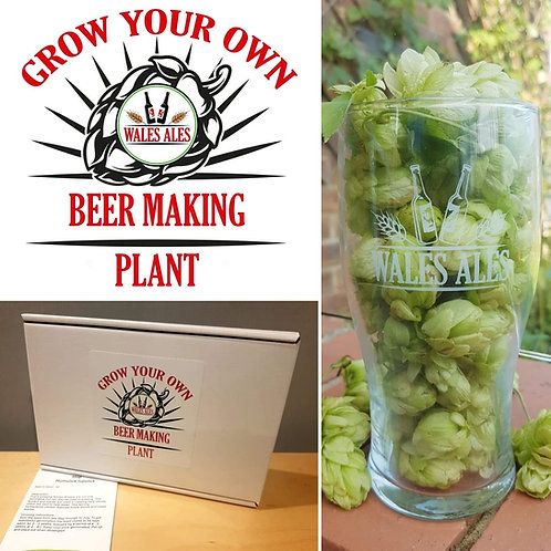 GROW YOUR OWN BEER PLANT