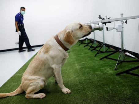 """【タイで新型コロナ感染対策に新しい味方 """"探知犬""""】"""