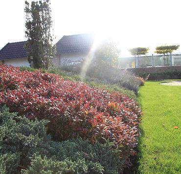 Stoop's Tuinen Halfweg