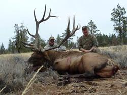 "Northeastern Bull 386"""