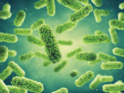Lactobacillus_137704717__©_nobeastsofier