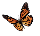 Butterfly4.png