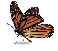 Butterfly Standing.png