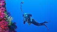 plongeur photographe.jpg