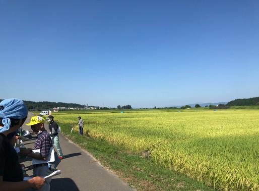 契約栽培米 圃場研修会に参加しました。