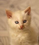 RosaNest2_kitten5_28 april 2021_DSC06388