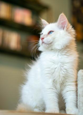 RosaNest2_kitten4_02 juni 2021_DSC06823.