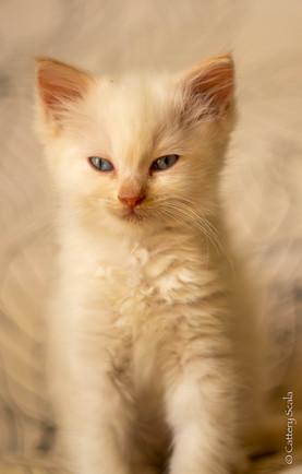 RosaNest2_kitten7_28 april 2021_DSC06396