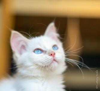 RosaNest2_kitten3_02 juni 2021_DSC06746.