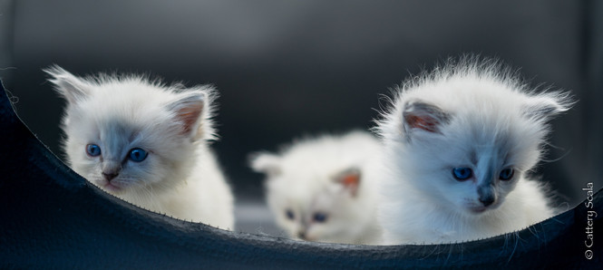 birdynest1_kitten1, birdynest1_kitten2,