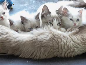 Alle kittens hebben een baasje gevonden