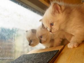 De kittenspaleis