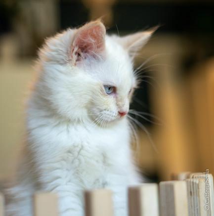 RosaNest2_kitten4_02 juni 2021_DSC06813.