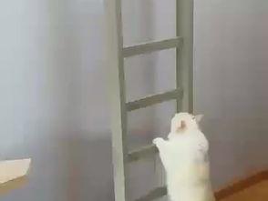 Romy op de trap