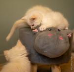 RosaNest2_kitten5, RosaNest2_kitten6, Ro