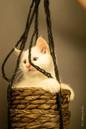 RosaNest2_kitten6_18 mei 2021_DSC06568.j