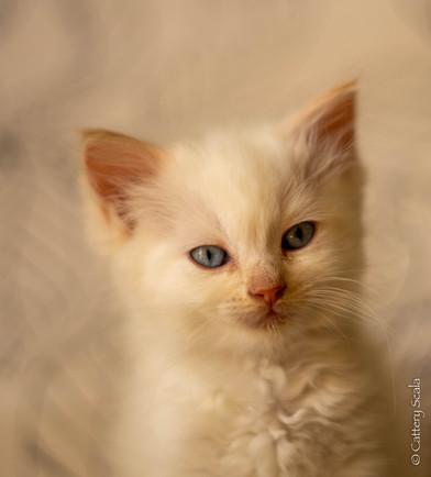 RosaNest2_kitten7_28 april 2021_DSC06394