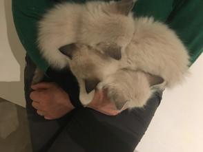 Met 16 kittens naar de dierenarts