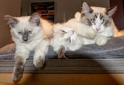 Milou, billie, adele